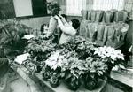 Poinsettia Sale 1978