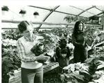 Poinsettia Sale 1979
